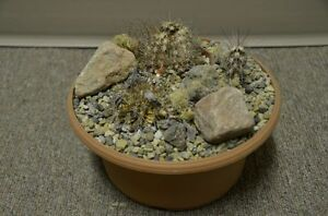 Variety of terra cotta  & plastic bowls for plants Strathcona County Edmonton Area image 4