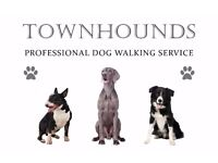 Townhounds - Professional Dog Walking Service