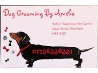 Dog Grooming By Amelia
