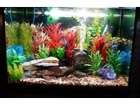 Fluval 95 litre Fish tank with cabinet below