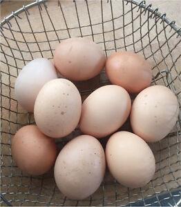 Farm fresh, free range eggs