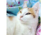 MISSING HOUSE CAT - REWARD IF FOUND