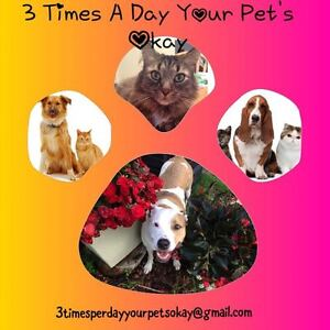 THREE TIMES PER DAY=YOUR PETS OK!