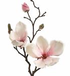 Magnolia Findings