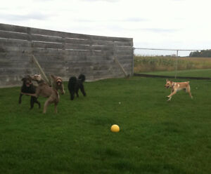 Doggie Daycare at Country Club for Pets