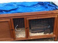 2x male Guinea pigs & hutch