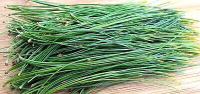 WHITE PINE NEEDLE Loose Leaf Tea 4 oz Bag - BEST QUALITY - Wild Harvested in -