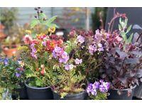 PERENNIAL PLANTS FOR THE GARDEN.