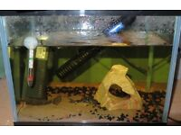 Two Small Fish Tanks With Guppys, Catfish and Plec