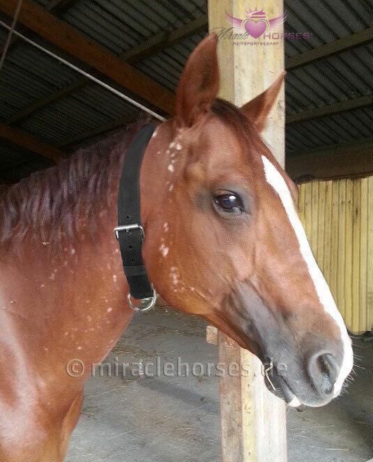 Imperial Riding BLACK Halsriemen Halsband Pferd stabil Nylon schwarz unisize