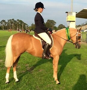 Horse riding lessons for all ages and abilities. Glossodia Hawkesbury Area Preview