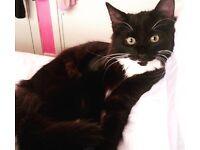 Missing black and white tuxedo cat