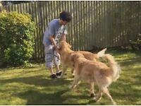 Dog sitting & walking services based on Gloucester Road