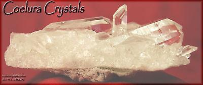 Coelura Crystals