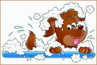 DOG GROOMING - Small to medium breeds