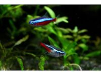 15 neons tropical fish