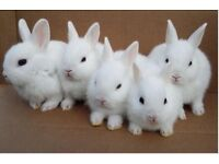 Cute baby rabbits