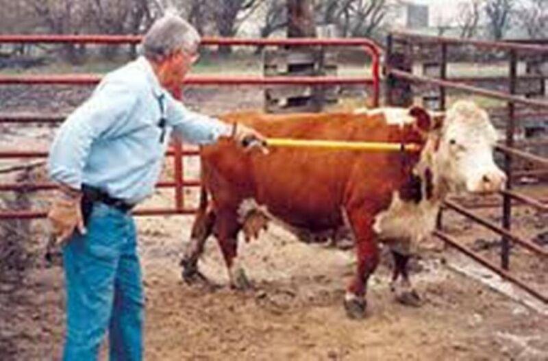 Long Shot Extended Pole Syringe  w/ 30cc Syringe Medicate cattle sheep goats