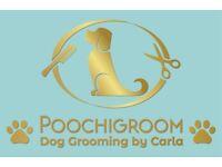 Poochigroom Dog Grooming