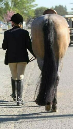 """NEW Tail Extension 2 pounds 36"""" by KATHYS TAILS Free Bag AQHA APHA PtHA NSBA"""