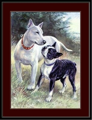 English Print Bull & Boston Terrier Dogs Picture Art