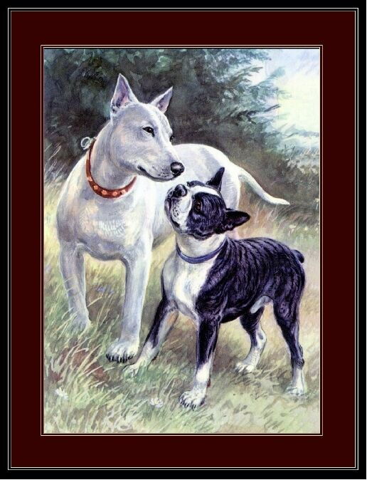 English Print Bull & Boston Terrier Dogs Picture Art