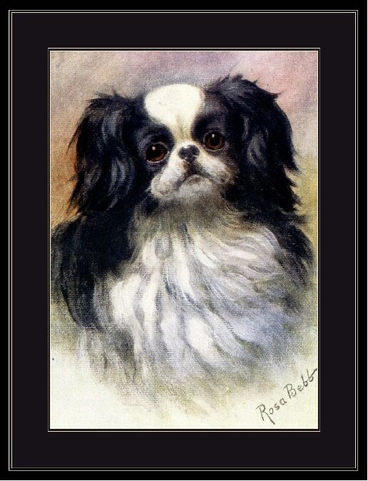 English Print Japanese Chin Spaniel Dog Art Picture