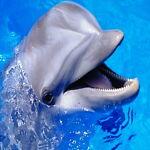 Lucky Dolphin 555