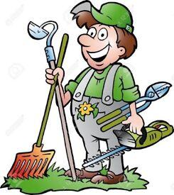 Cheap Gardener in southside Glasgow
