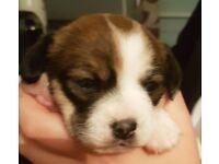 Puppy's 4 sale