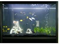 FLUVAL PROFILE 1000 Aquarium Fish Tank Set