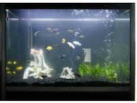 FLUVAL PROFILE 1000 Aquarium Set-Up