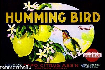 Santa Susana Ventura Humming Bird Lemon Citrus Fruit Crate Label Art Print