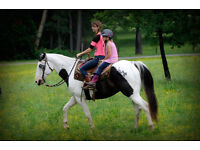Arrow 2006, 15.1h, Black & White Paint Gelding