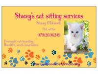 Cat sitter - pet sitting service available