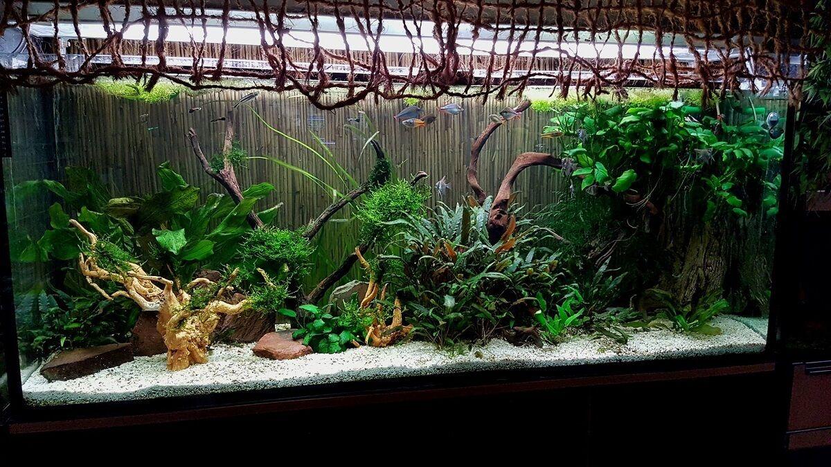 aquariumrio