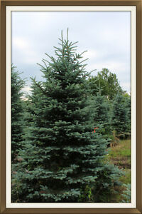 FALL Special! $15.00 and up beautiful landscaping trees