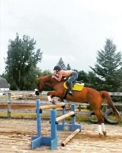 On property lease or PB on gelding