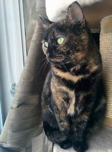 "Adult Female Cat - Tortoiseshell: ""Sassy"""