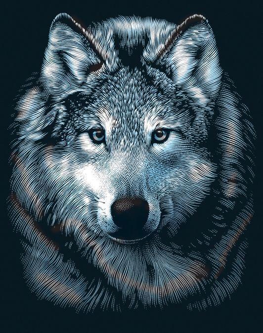 Reeves Scraperfoil Engrave Art Kit - Wolf Portrait - Engraving
