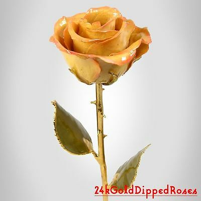 24k Gold Dipped Cream / Pink Real Rose Gold Stem (Free Christmas Gift Box)
