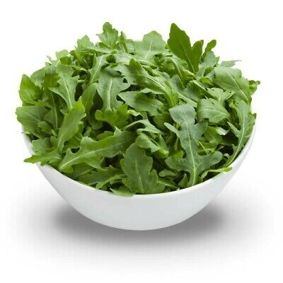 ROCKET ARUGULA ORGANIC SEEDS, BURPEE 900 mg SEED PACK, USA SELLER, FREE SHIPPING