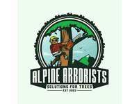 Alpine Arborists £10 per foot.