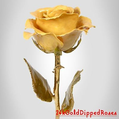24k Gold Dipped Ivory Real Rose Gold Stem (Free Anniversary Gift Box)