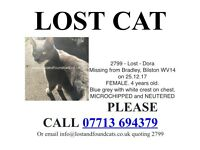 LOST CAT PLEASE HELP MISSING