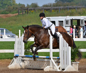 Quiet and fun horse for part-board or part-lease ! London Ontario image 2