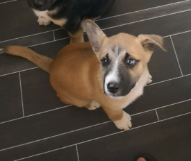 Dog needing home | Dogs & Puppies for Sale - Gumtree