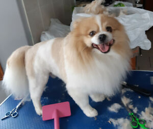 Dog Grooming on Wheels in your home grooming