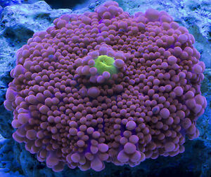 New local salt water aquarium reef forum now just opening