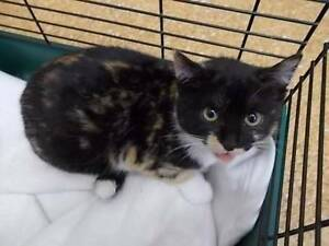 Young Adult Cats Looking for a Forever Home Taree Greater Taree Area Preview